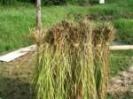tina 2 riz
