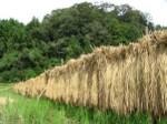 tina 3 riz