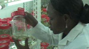 Recherche scientifique en Afrique subsaharienne