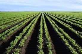 Oui à l'agrobusiness en Afrique ?