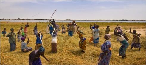 La croissance dans le secteur agricole est 2 fois plus efficace pour réduire la pauvreté en Afrique (source: BCE)